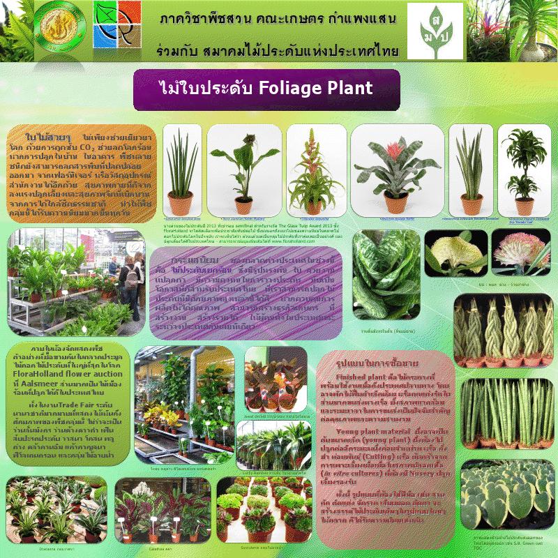 ไม้ใบประดับ Foliage Plant