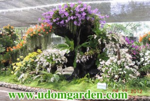 orchid expo