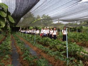 นักศึกษามหา'ลัยจุฬา ชมสวนไม้ประดับ