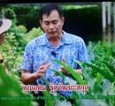 การพัฒนา เกษตรไทย ให้ยั่งยืน