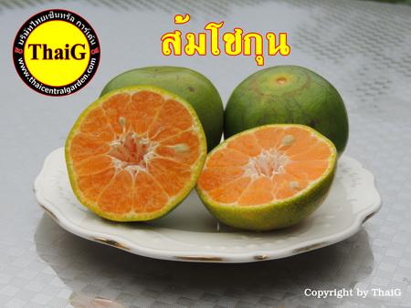 ส้มเนื้อหวาน ส้มโชกุน